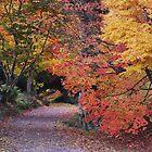autumn woodland 2 by purpleminx