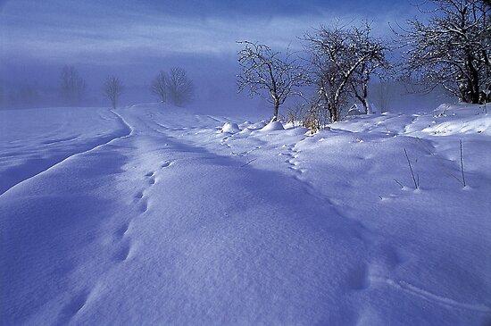 Swedish Winter by Blake Steele