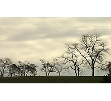 Waltzing Trees Photographic Print