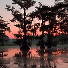 Caddo Lake in the Morning by Roger Bernabo
