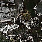 Lotus pod by tanmari