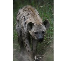 Spotted Hyena Photographic Print