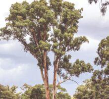 Stately Eucalyptus Tree Sticker