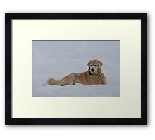 Resting In The Snow Framed Print