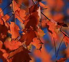 Orange fall- MD by Sjkphotography