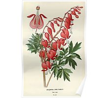 Favourite flowers of garden and greenhouse Edward Step 1896 1897 Volume 1 0072 Bleeding Heart Poster