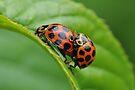 Love Bugs by John  Kowalski
