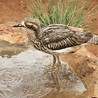 A Bush Stone-curlew by Bob Hardy