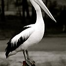 Pelican Poser  by Michelle Crouch