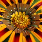flower8 by Kat36