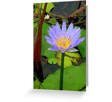 Water Lilly Cooroibah, QLD, 2. Greeting Card