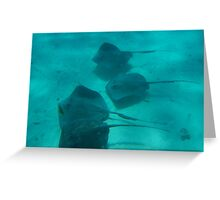 Sting Ray City, Cayman Islands Greeting Card