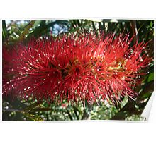 Red Bottle Brush 2 Poster