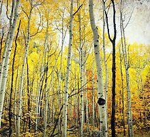 Aspen Grove, Wasatch Mountains by Ryan Houston
