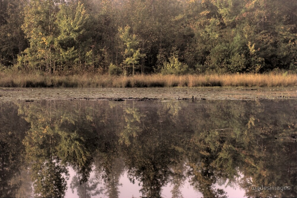 On Morning Pond by wadesimages