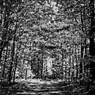 Path in the Woods by Theodore Black