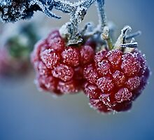 Fat berries by Dullface