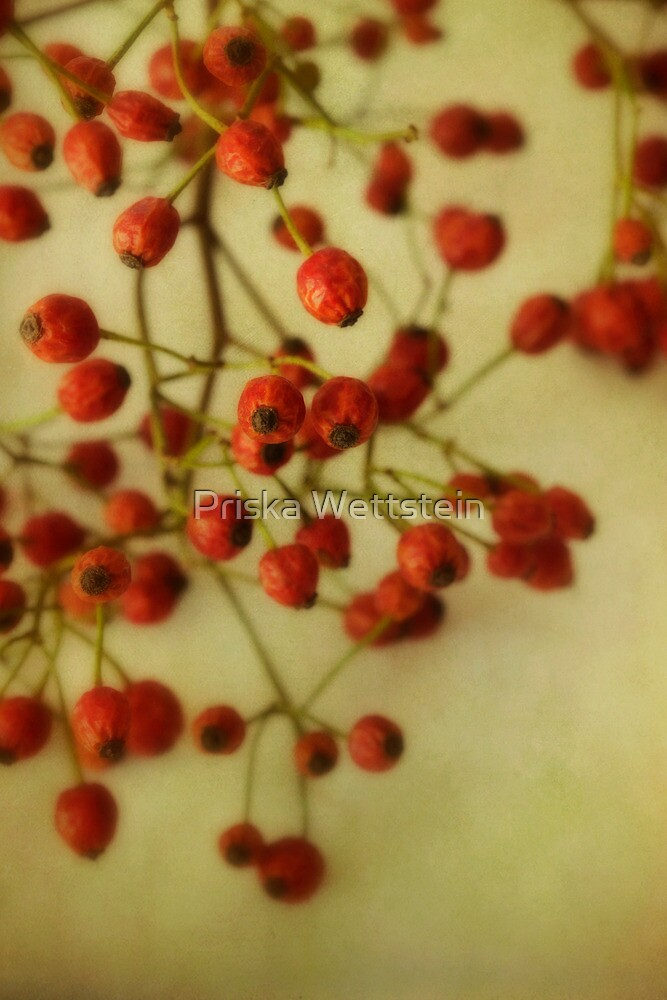 Rose Hips by Priska Wettstein