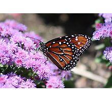 Floral Monarch Photographic Print