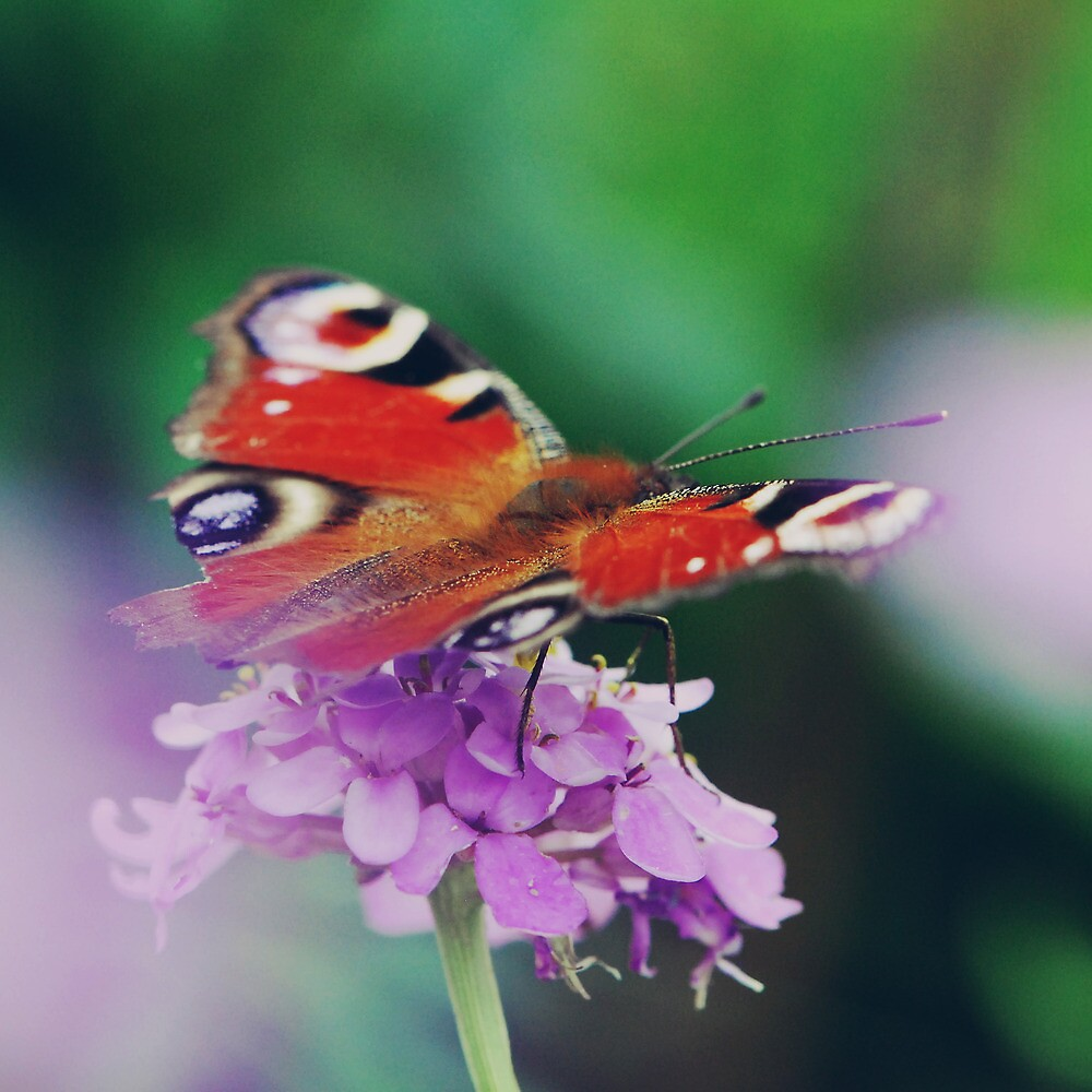 butterfly, fly, fly away., by subtitulo