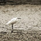 Little Egret by Debbie Ashe