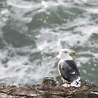 Gull by Debbie Ashe