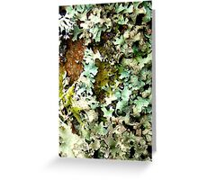 Natural Lichen Tapestry Greeting Card