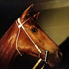 PHAR LAP - IMMORTAL by Helen Akerstrom Photography