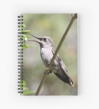 Little Bird Spiral Notebook