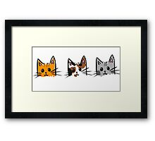 Three Kittens Framed Print
