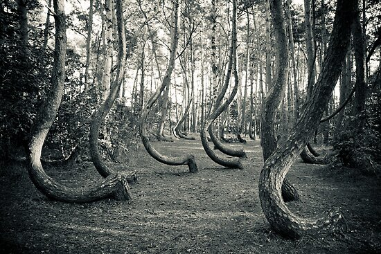 Curved Forest by seawhisper