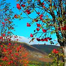 """The Ochil Hills featured in """"Your Country's Best"""" & """"Season's change"""" by ©The Creative  Minds"""