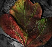 Nature by Sarah Horsman