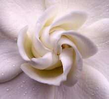 Unfolding Beauty. by Gabrielle  Hope