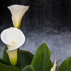 Arun Lilies by Fortune8