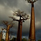 Baobabs Alley by Martin76
