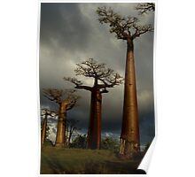 Baobabs Alley Poster