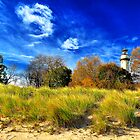 Windswept Sandgrass, Lighthouse Beach by James Watkins