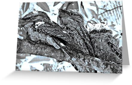 Tawny Frogmouth Family (2010) - In The Mango Tree by Neil Ross