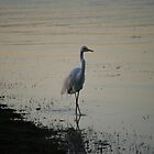 Egret Quietly Fishing at Dusk by aussiebushstick