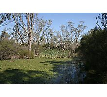 An Australian Billabong in the Bush Photographic Print