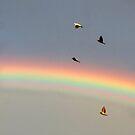 Rainbow doves by Anthony Thomas