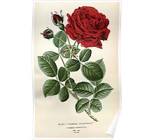 Favourite flowers of garden and greenhouse Edward Step 1896 1897 Volume 2 0028 Rose General Jacqueminot Poster
