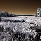 The Constance Lake Marsh by Debbie Pinard