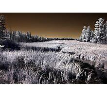 The Constance Lake Marsh Photographic Print