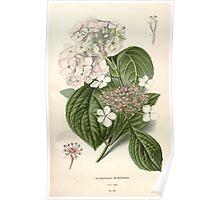 Favourite flowers of garden and greenhouse Edward Step 1896 1897 Volume 2 0046 Hydrangea Hortensia Poster