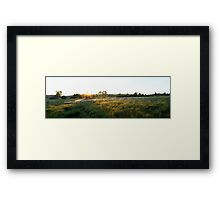 Cotton grass flowering in the moorland Framed Print
