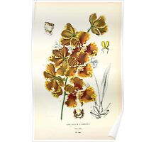 Favourite flowers of garden and greenhouse Edward Step 1896 1897 Volume 4 0043 Oncidium Forbesii Poster