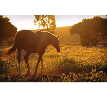 Lazy spring evening Photographic Print
