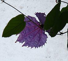 Purple Batwing Flower by MarianBendeth